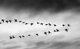 dynamics migration